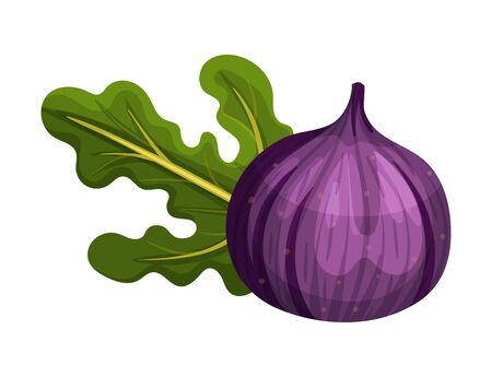 Whole Purple Fig Fruit with Bright Green Leaf Rested Nearby Vector Illustration. Ripe Sweet Organic Food with Thin Skin for Jam Preparation and Raw Vitaminic Eating Иллюстрация
