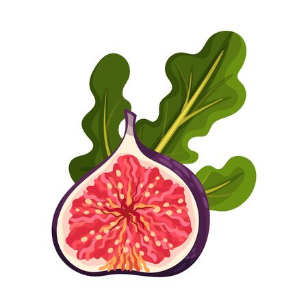 Cross Section of Fig Fruit Showing Bright Flesh with Small Seeds Inside Vector Illustration