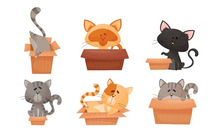 Cute Cat Sitting and Sleeping in Carton Box Vector Set. Domestic Funny Pet with Whiskers Playing and Resting 일러스트