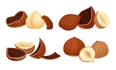 Realistic Hazelnuts with Whole and Cracked Shell Vector Set. Natural Filbert with Nutshell Full of Protein Concept
