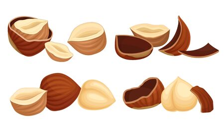 Realistic Hazelnuts with Whole and Cracked Shell Vector Set