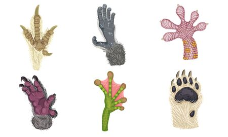 Animal Paws with Claws and Hair Isolated on White Background Vector Set. Different Animalistic Limbs