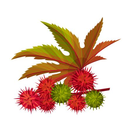 Ricinus or Castor Oil Plant with Green Palmate Leaves and Red Fruit Vector Illustration Illustration