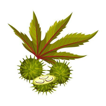Ricinus or Castor Oil Plant with Green Palmate Leaves and Red Fruit Vector Illustration  イラスト・ベクター素材