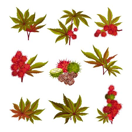 Ricinus or Castor Oil Plant with Green Palmate Leaves and Red Fruit Vector Set. Perennial Flowering Plant with Spiny Capsules as Medical Herb