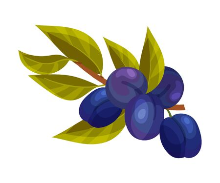 Plum Branch with Mature Fruits Hanging Vector Illustration 向量圖像