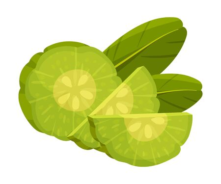 Sliced Garcinia Cambogia Fruit Looking Like Small Green Pumpkin Vector Illustration
