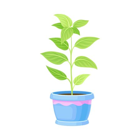 Young Plant in Pot for Reseting in Soil Outside Vector Illustration