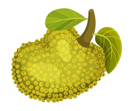 Whole and Ripe Egg-shaped Jackfruit with Green Seed Coat and Leaf Vector Illustration Illustration