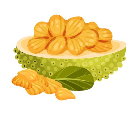 Ripe Bright Jackfruit with Green Seed Coat and Cut Section Showing Fibrous Core Vector Illustration