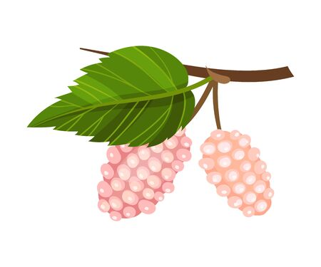 Mulberry Branch with Immature Pink Berries Vector Illustration Ilustração