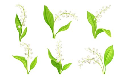 White Bellflower or Campanula on Stem with Green Leaf Vector Set