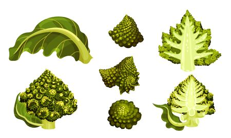 Romanesco Broccoli or Roman Cauliflower with Spiral Inflorescence Vector Set