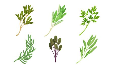 Kitchen Herbs and Condiment with Parsley and Tarragon Vector Set