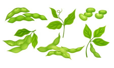 Green Pods with Green Leaves and Soy Beans Inside Vector Set