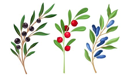 Berry Branches with Leaves and Mature Small Fruit Isolated on White Background Vector Set