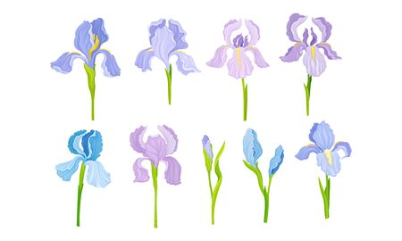 Iris Flower on Stem with Sepals and Standing Upright Petals Vector Set Иллюстрация