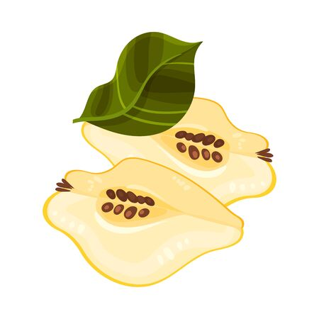Halved Quince Showing Light Flesh with Seeds Vector Illustration. Bright Golden-yellow Mature Fruit with Intense Aroma and Tart Flavor