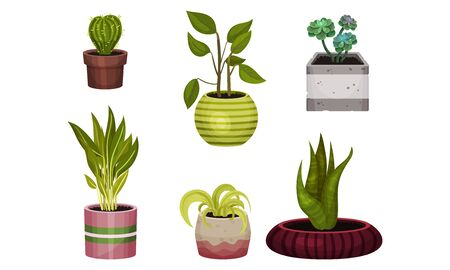 Green Exotic House Plants Growing in Ceramic Pots Vector Set