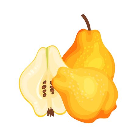 Whole and Halved Quince Showing Seeds and Flesh Vector Illustration Illustration