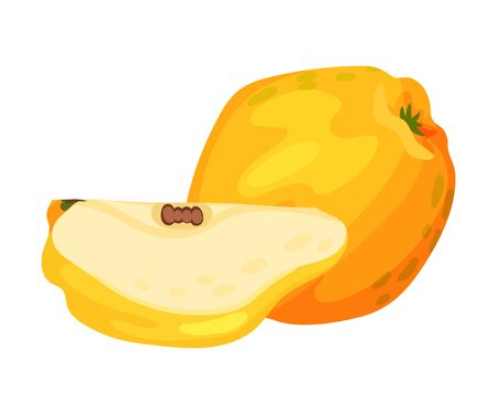 Whole and Halved Quince Showing Seeds and Flesh Vector Illustration. Bright Golden-yellow Mature Fruit with Intense Aroma and Tart Flavor