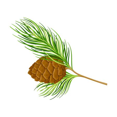 Cedar Branch with Evergreen Needle-like Leaves and Barrel-shaped Brown Seed Cones Vector Illustration
