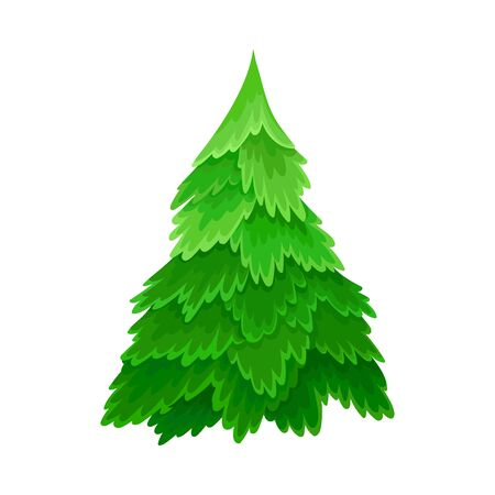 Pine or Fir Tree with Needle Leaves as Forest Element Vector Illustration Ilustrace