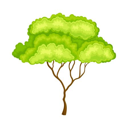 Green Tree with Brown Trunk and Leafy Crown as Forest Element Vector Illustration Illustration