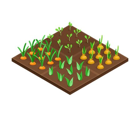 Garden Bed or Cultivation Bed with Growing Vegetables Vector Isometric Illustration