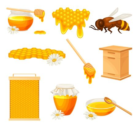 Honey omb with Hexagonal Wax Cells and Glass Jar Poured with Honey Vector Set