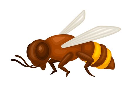 Honey Bee with Yellow Stripes and Wings Vector Illustration