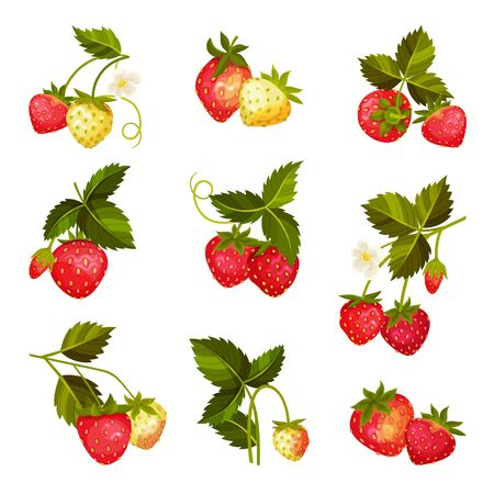 Strawberry Branches with Hanging Whole Red Berries Vector Set