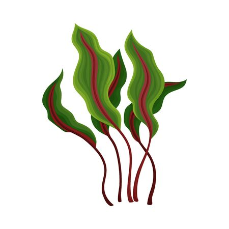 Marine Colorful Algae with Ragged Edges on the Leaves Vector Illustration. Underwater Ocean Flora and Organic Herb Concept