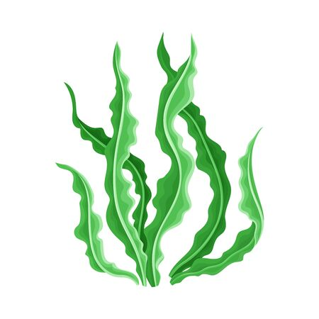 Marine Colorful Algae with Ragged Edges on the Leaves Vector Illustration