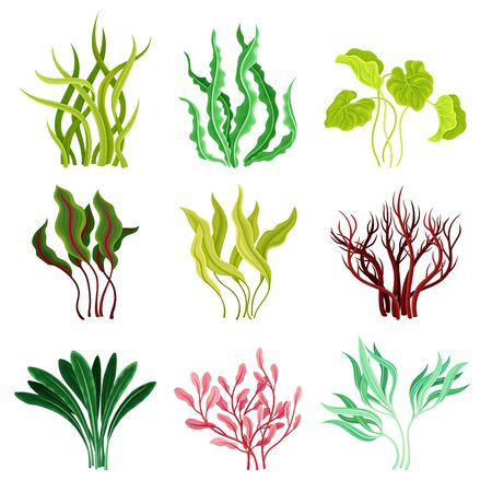 Underwater Seaweeds or Algae Growing on the Ocean Bottom Vector Set