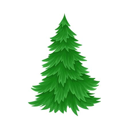 Evergreen Coniferous Fir Tree with Exuberant Foliage Vector Illustration Ilustração