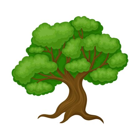 Oak Tree with Exuberant Green Foliage and Trunk Vector Illustration