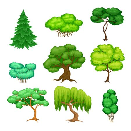 Trees with Exuberant Green Foliage and Trunk Vector Set Ilustração