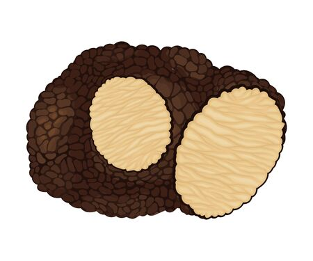 Truffle with Cut Slice Showing White Flesh Vector Illustration. Edible Mushroom as Cooking Ingredient in International Haute Cuisine