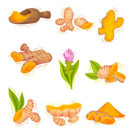 Turmeric Plant with Root and Powder in Bowl Vector Set. Yellow Curcuma Condiment with Bitter Flavor and Earthy Mustard-like Aroma Used as Coloring and Flavoring Agent in Asian Cuisine