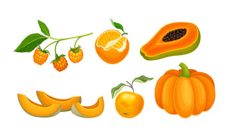 Vegetables and Fruits with Ripe Pumpkin and Papaya Vector Set Çizim