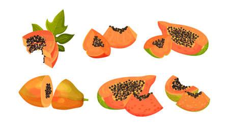 Papaya Fruit Cross Section Showing Orange Flesh and Numerous Black Seeds Vector Set Çizim