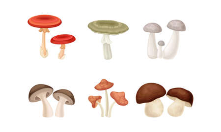 Different Forest Mushrooms or Toadstools with Stem and Cap Isolated on White Background Vector Set. Seasonal Fleshy Spore-bearing Fruiting Bodies of Edible Fungus Concept