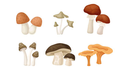 Different Forest Mushrooms or Toadstools with Stem and Cap Isolated on White Background Vector Set Ilustracja
