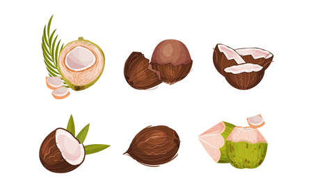Whole and Halved Coconut with Hard Shell and Fibrous Husk Vector Set