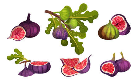 Fig Fruit Whole and Cut with Thin Skin and Many Small Seeds Inside Vector Set
