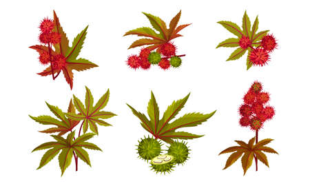 Ricinus or Castor Oil Plant with Green Palmate Leaves and Red Fruit Vector Set