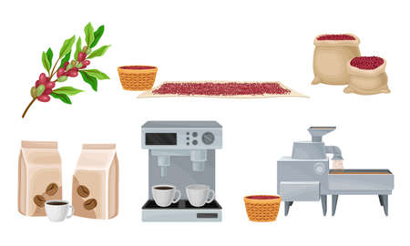 Coffee Production with Conveyor Equipment and Coffea Fruit Harvesting Vector Set Illustration
