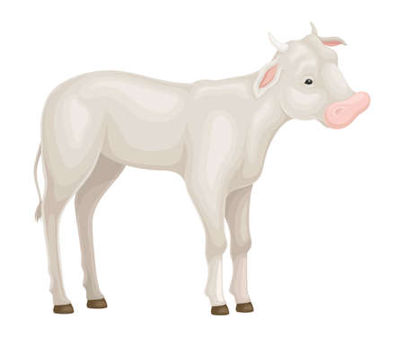 Calf Standing Isolated on White Background Vector Illustration