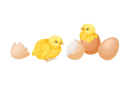 Cracked Eggshell with Yellow Chicks as Hatching Process Vector Illustration
